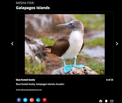Blue-Footed Booby, Galapagos Island, Don Mammoser Photo tour